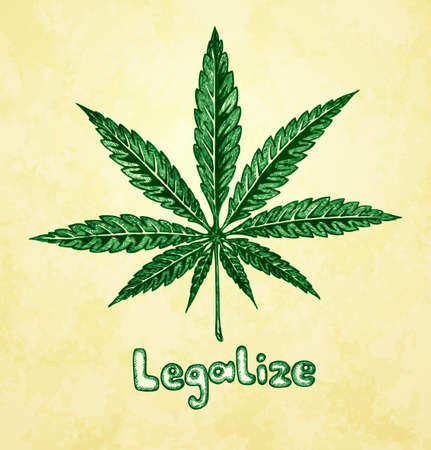 Marijuana  cannabis   Hemp leaf in a sketch style  Hand-drawn vector illustration