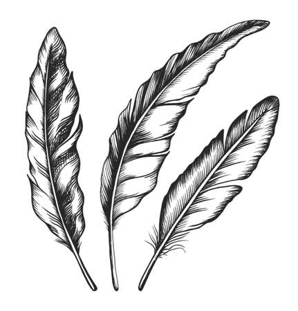black feather: Three black feathers isolated on white background   Stock Photo