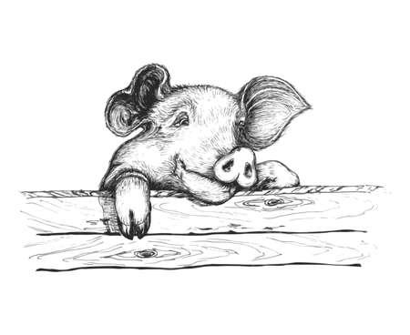 Sly pigSly Schwein Blick über den Zaun. Sie hat intelligenten Augen und lustigen Ohren. Illustration