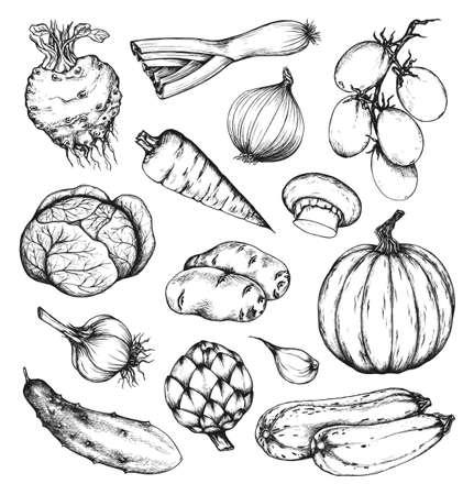 cebolla: Orgánicos verduras frescas naturales fijados. Alcachofa, pepino, calabaza, calabacín, el apio, la cebolla, el ajo, la zanahoria, la patata, la col, tomate, puerro, champiñones. Recolección de dibujado a mano elementos de diseño. Set 1