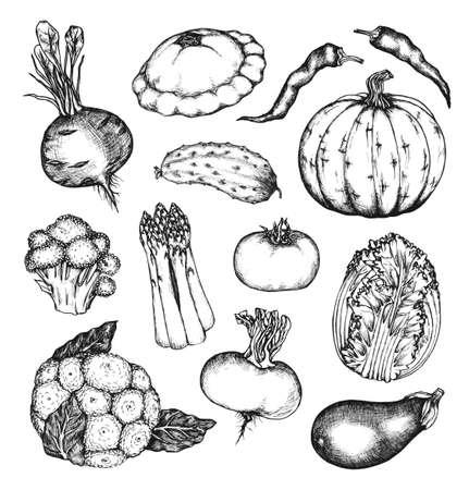Organic natural vegetables set. Cucumber, pumpkin, cabbage, tomato, beet, hot pepper, turnip, cauliflower, eggplant, broccoli, asparagus. Collection of hand drawn design elements. Set 2
