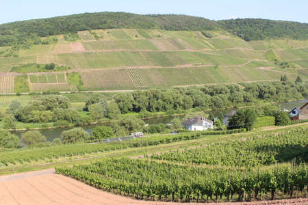 mosel: Mosel vineyard Germany Stock Photo