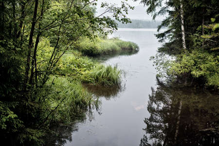 A fragment of the wild nature of the Urals Summer photo