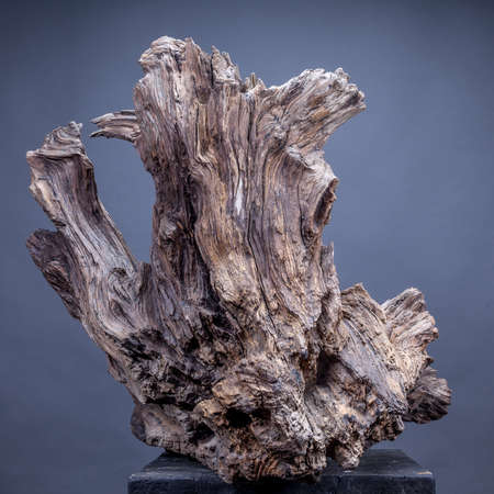 Old root on gray background