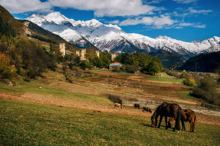 Horses graze in pasture against Svan towers in Mestia village and mountains with snowy peak. Samegrelo-Zemo Upper Svaneti, Georgia.