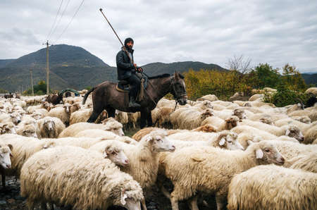 Zhinvali village, Mtskheta-Mtianeti, Georgia - October 21, 2016: Shepherd with crook riding a horse and herding a group of sheep
