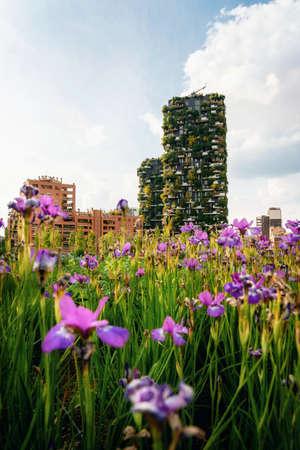Milan, Italy - May 7, 2019: Iris flowers Imagens