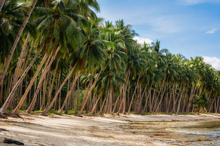 Jungle with palm trees on Coconut Beach in Port Barton, Palawan, Philippines Imagens
