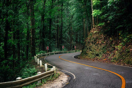 Winding road through green Bilar Man-Made Forest, Bohol, Philippines Imagens
