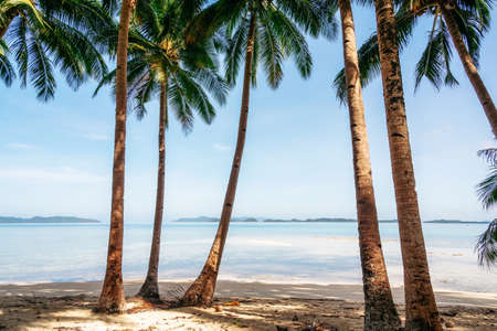 Jungle with palm trees on Coconut Beach in Port Barton, Palawan, Philippines Reklamní fotografie