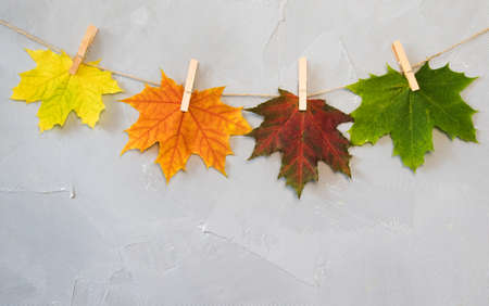 Maple leaves on clothespins with the word autumn Archivio Fotografico