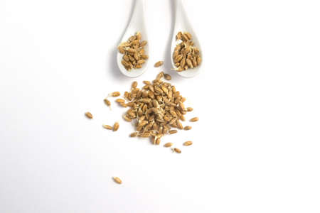 Sprouted wheat on a light background. toned
