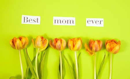 Row of tulips on coloful background with space for message. Mothers Day background. Top view