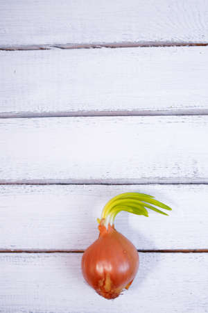 Sprouted orange onion and not planted in soil, closeup on wood backround 免版税图像