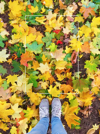 Autumn season in sneakers on colored leaves with white frame on it