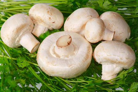 The raw white champignons with fresh greens
