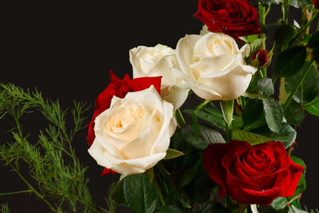 The bouquet red and creamy roses from dark background photo
