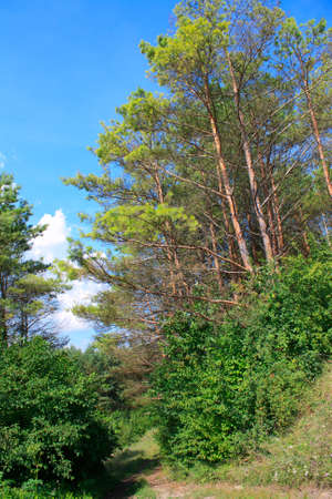 Summer landscape with green forest and blue sky photo