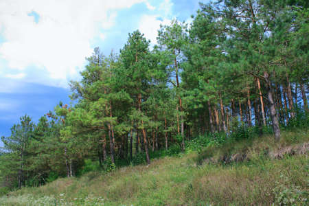 Summer landscape with green forest and cloudy sky photo