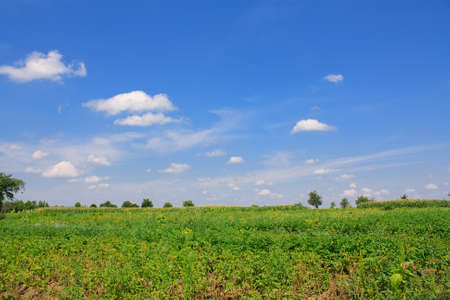 Summer landscape with green field, tree and blue sky photo