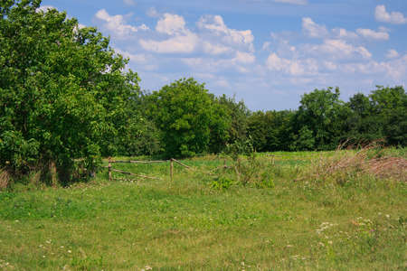 Summer landscape with green meadow, forest and blue sky photo