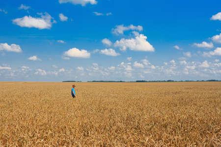 Boy on a big field of wheat photo