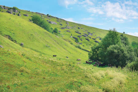 Summer landscape with cows and green mountains photo