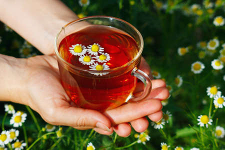Hand with cup of herbal tea and chamomile still life photo