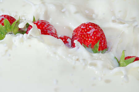 Fresh strawberries falling into the milk with a splash closeup photo