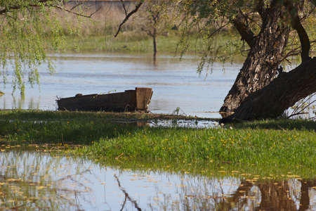Old wooden boat under a tree on the bank of the summer river photo
