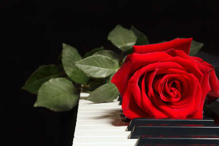 Scarlet rose on keyboard of the piano on a black background Stock Photo