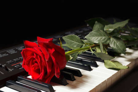 Rose on keyboard of the synth on a black background