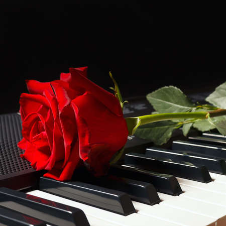 Scarlet rose on keyboard of the electronic synth on a black background Stock Photo