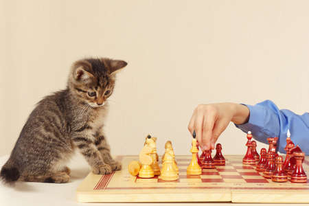 Young boy with a kitten plays chess. Stock Photo