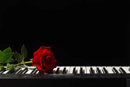 Scarlet rose on the keys of the synth on a black background