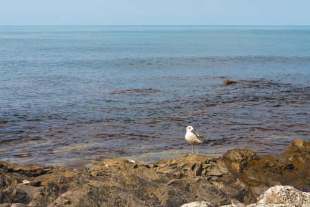 Seagull on the coastal reefs on the background of a calm sea Stock Photo