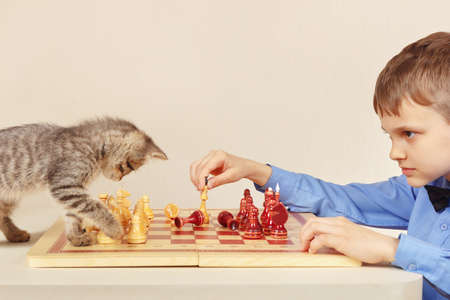 Little chessplayer with a tabby kitten plays chess.