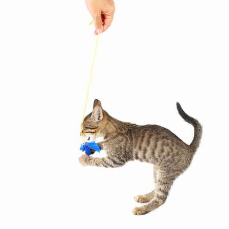 Lindo gatito se juega con un lazo de papel azul sobre un fondo blanco
