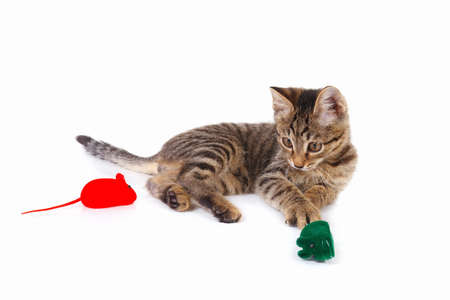 Pretty kitten is played with a red and green toy mouse on a white background
