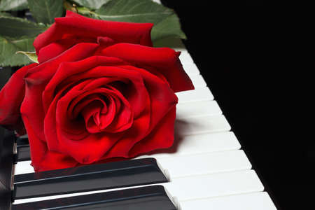 Romantic red rose on keyboard of the piano on a black background Stock Photo