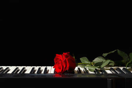 Rose on the keys of the electronic synth on a black background