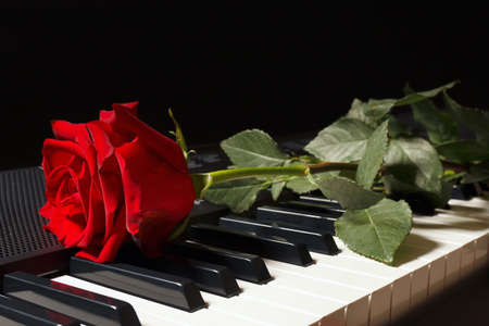 Scarlet rose on keyboard of the electronic piano on a black background