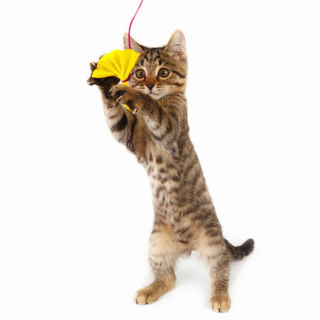Pretty kitten is played with a yellow paper bow on a white background