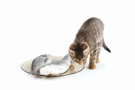 Pretty kitten sniffs at fish in a plate on a white background