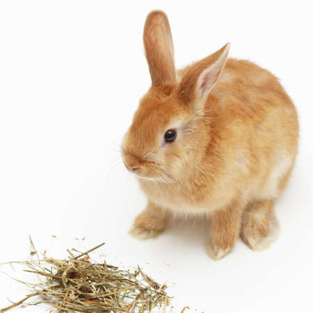 Decorative little rabbit with hay on a white background