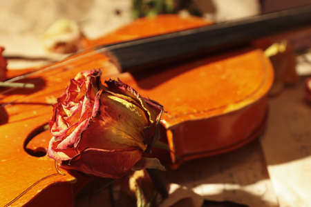 Dried roses, violin and vintage sheet music close up. Selective focus. Stock Photo