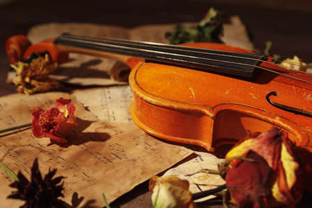 Violin, dried flowers and old sheet music close up. Stock Photo