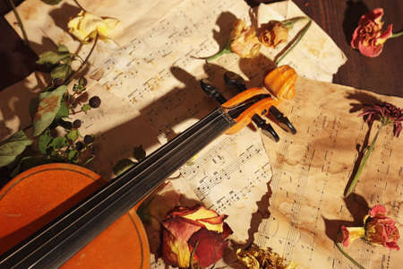 Rare violin, dried flowers and vintage sheet music close up. Stock Photo