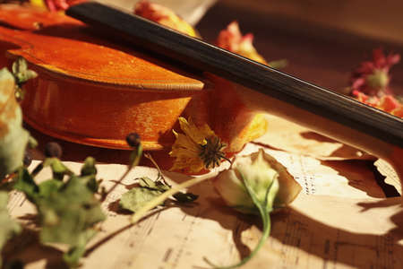 Vintage violin, dried flowers and old sheet music close up.