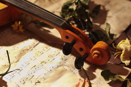Vintage violin, dried flowers and rare music notes close up. 版權商用圖片